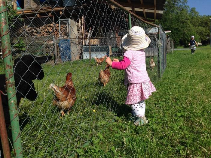 Op maandag had Eva een feestje en gingen Liza en ik weer eens bij de schaapjes kijken