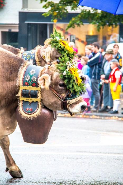 Zoals vorige week al verteld, gingen we zaterdag koeien kijken in het stadje Altstätten.