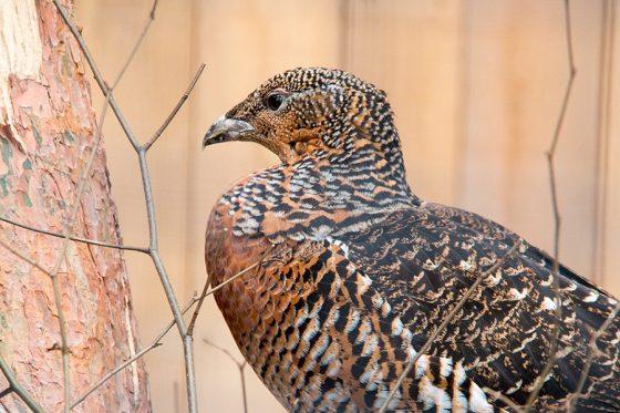 Volgens Floris een jonge roofvogel