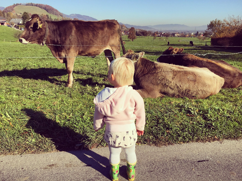 En kijken uren naar koeien. Loeiende koeien. Wilde koeien. Snurkende koeien