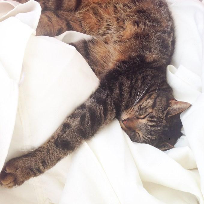 De kat heeft het zich ook relaxed gemaakt deze week.
