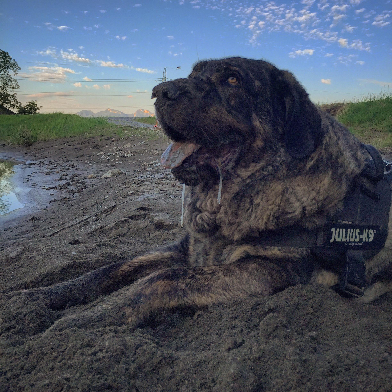 Mello geniet ook van alles. Van het zand, het water en de stokken die er liggen.