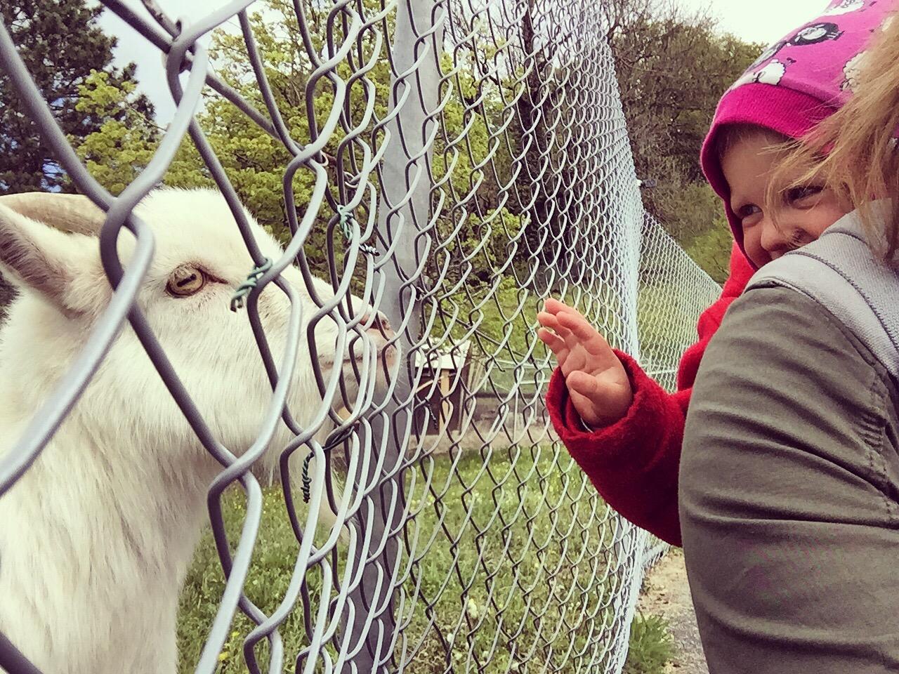 Er is een kinderboerderij aan het openen, de dieren zijn er al!