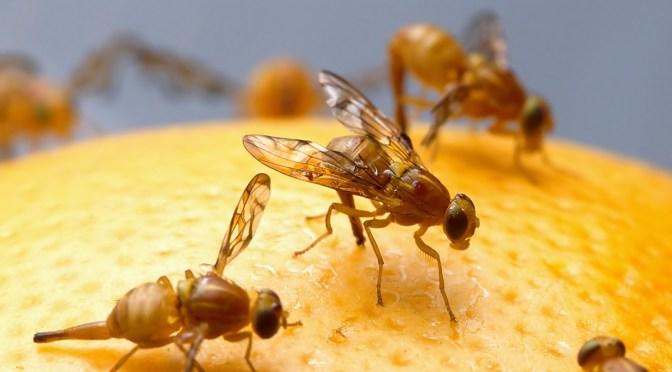 Maak eenvoudig een eind aan de fruitvliegjesplaag - Maak een hoofdbord aan ...