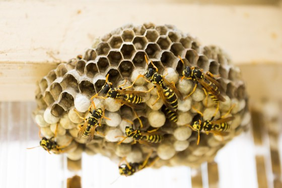the-hive-335984_1280