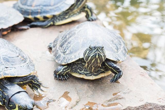 Woensdagmiddag rommelden we wat in de tuin en zette ik onze 13 schildpadden op Facebook. Ze kunnen niet mee naar Zwitserland. Gelukkig zijn we er inmiddels 8 kwijt, dus heb goede hoop op de rest.
