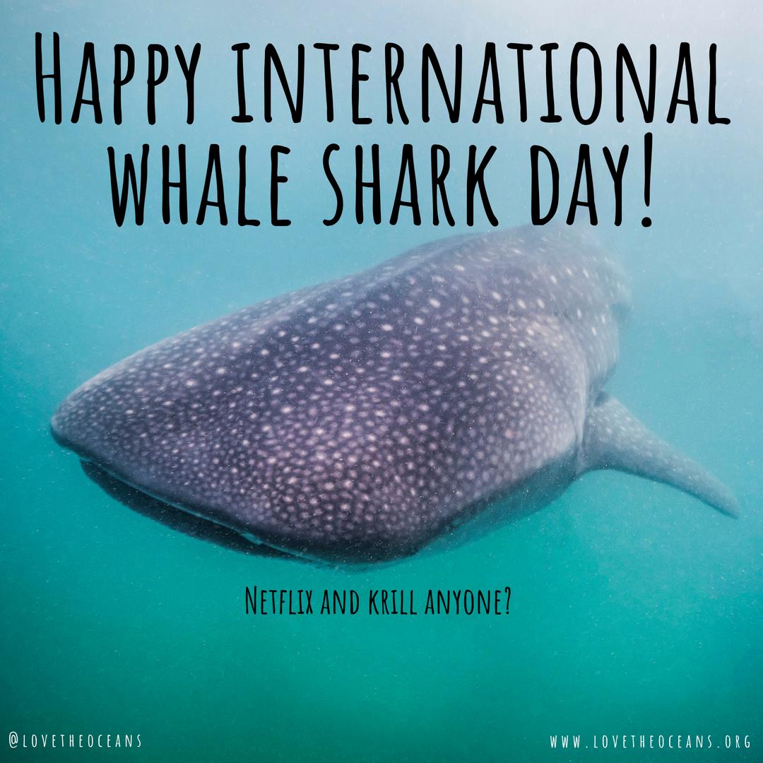 Happy international whale shark day!