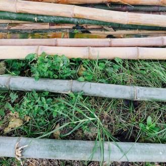 bamboo piles