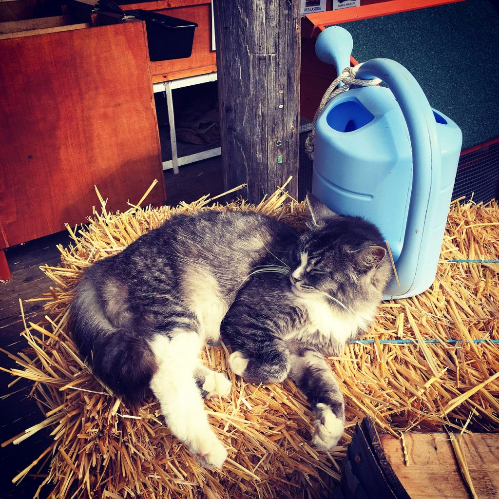 A barn cat lounging on a hay bale.