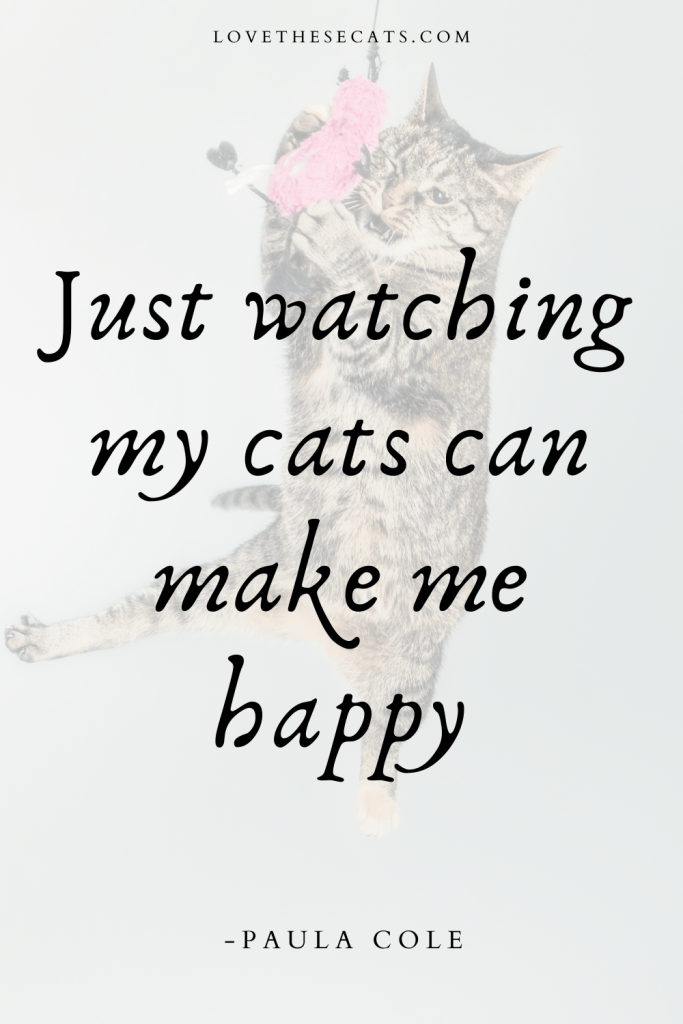 """A quote about cats that says """"Just watching my cats can make me happy."""" -Paula Cole"""
