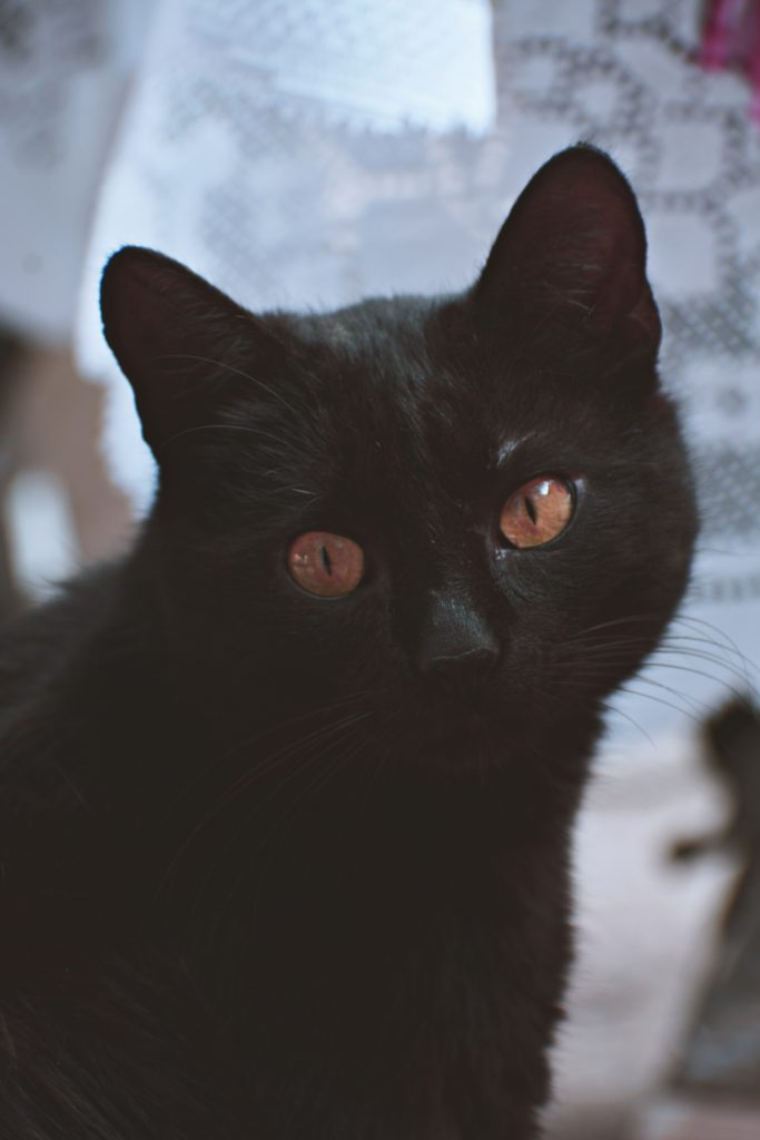 A cat with solid black fur looks at the camera with copper eyes.