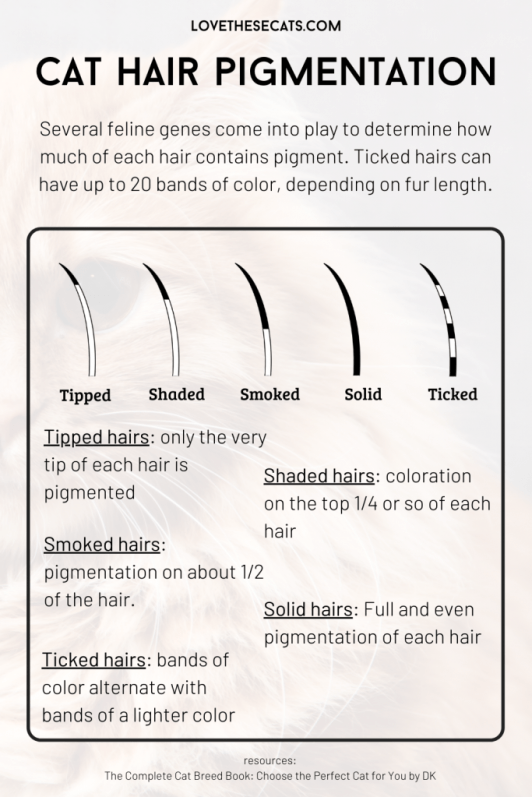 Cat fur can have variable pigmentation along each hair length.