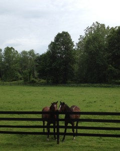Horses at a fence.