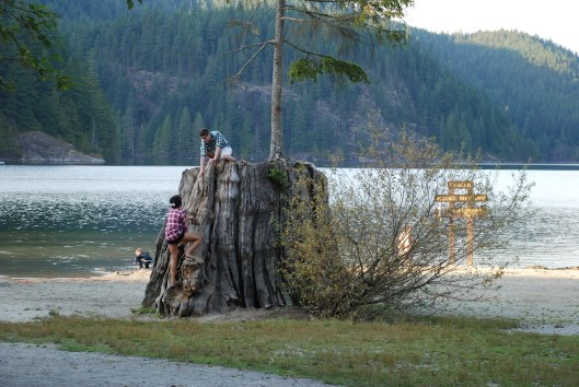 Trees grow out of tree trunks Vancouver Buntzen Lake.
