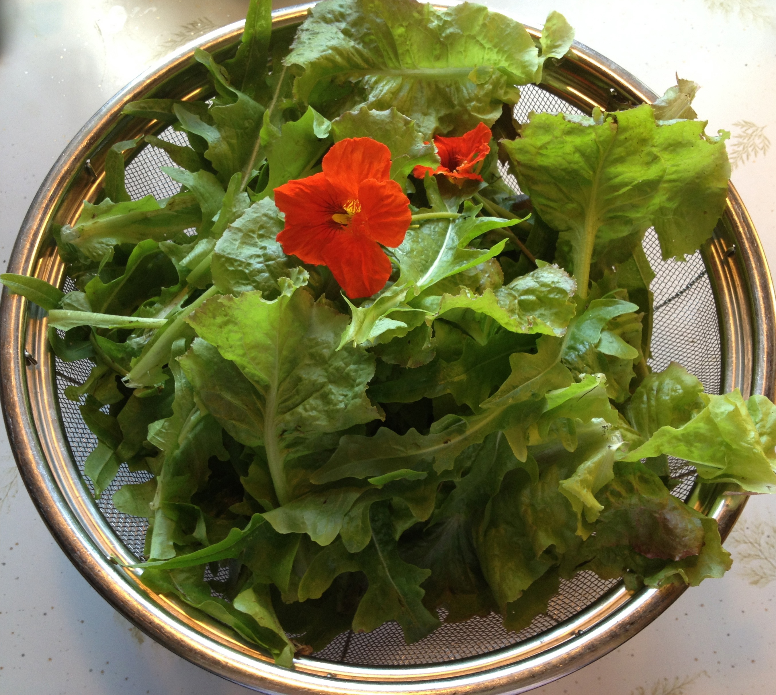 Just cut garden lettuce with nasturtiums in a colander.