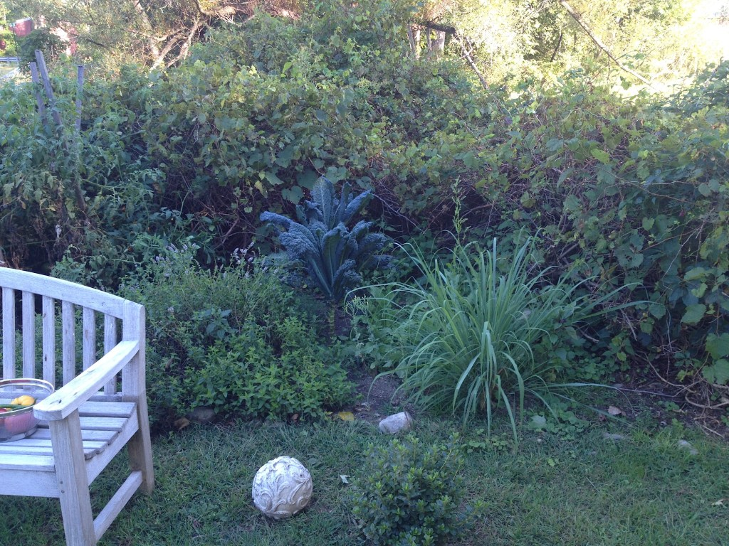 Herb garden in upstate NY.