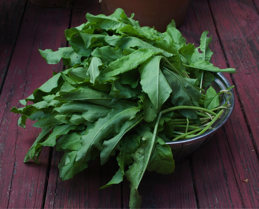 Sorrel leaves in a colander.