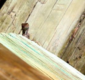 Gecko? Super cute!