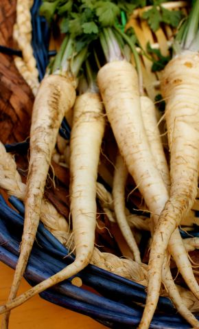 Are these parsnips?