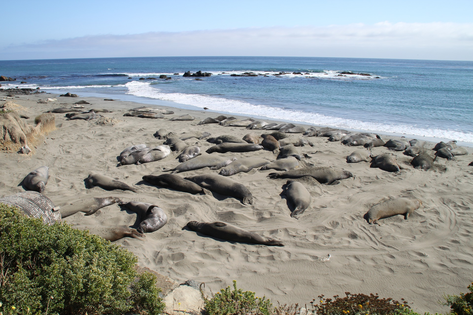 Elephant Seals, Central Coast of California