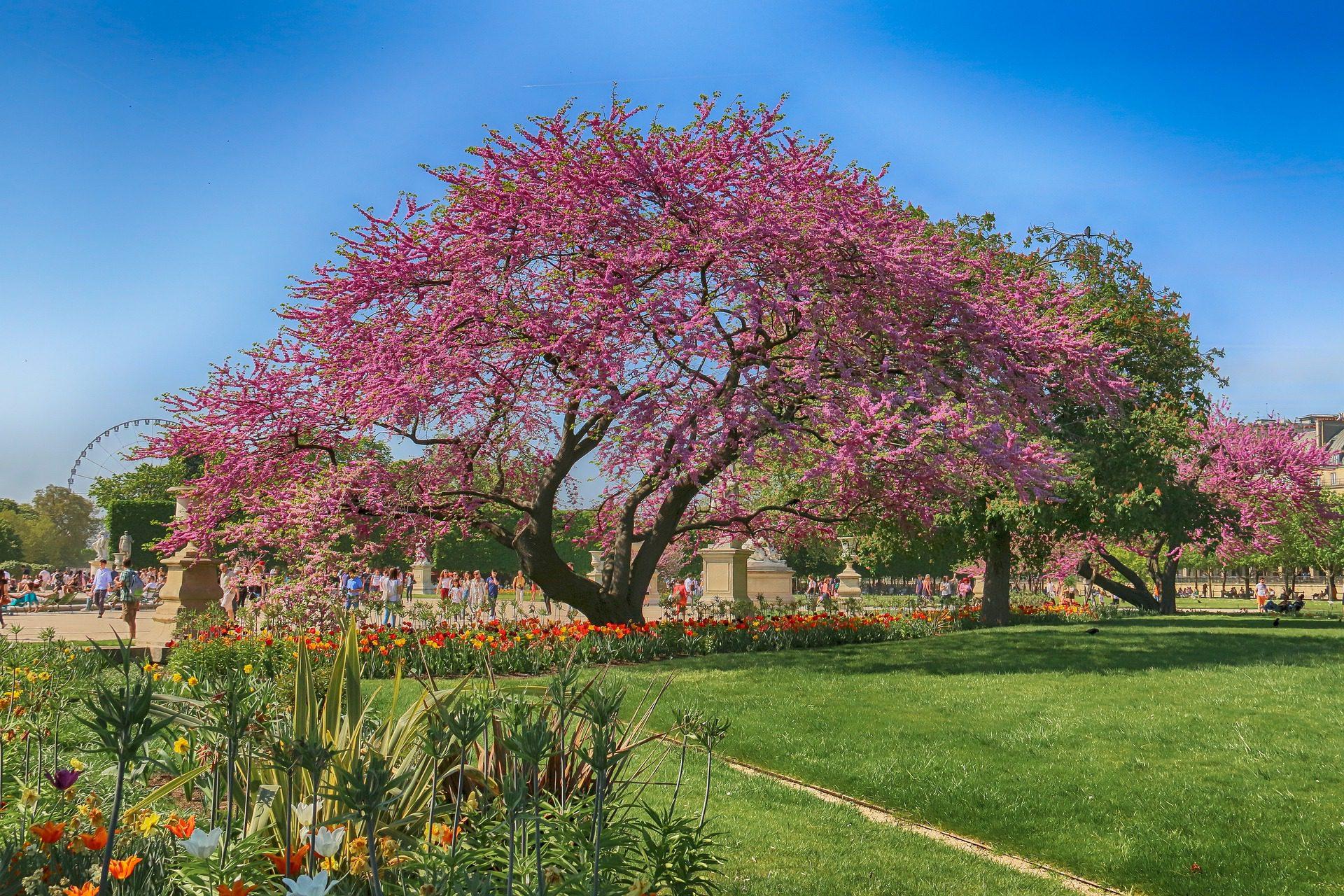Tuileries Gardens or Jardin de Tuileries, Paris