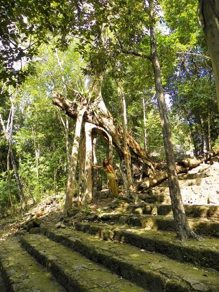 Удивительные деревья растут на камнях