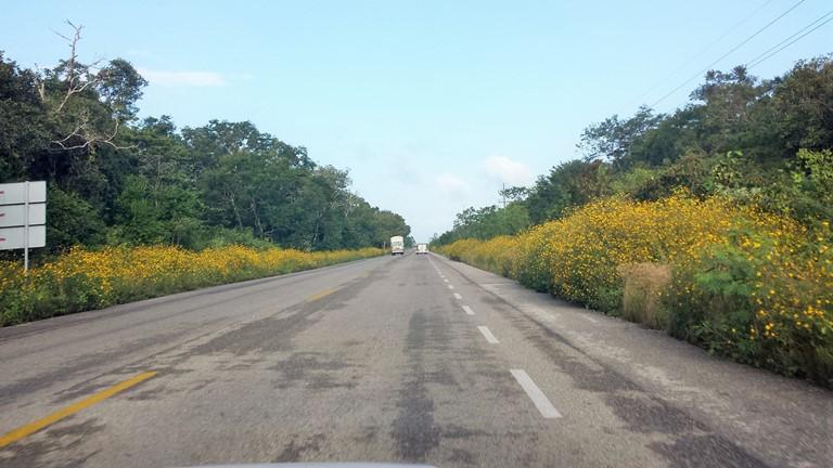 Road Tulum -Coba