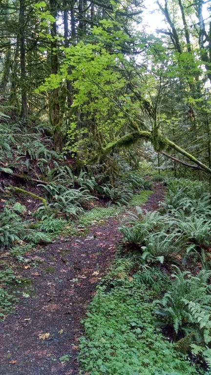Giant Douglas Fir Trail