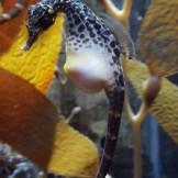 Aquarium Minneapolis (7)