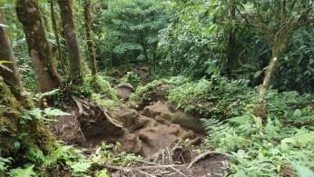 Cerro Chato Trail (10)