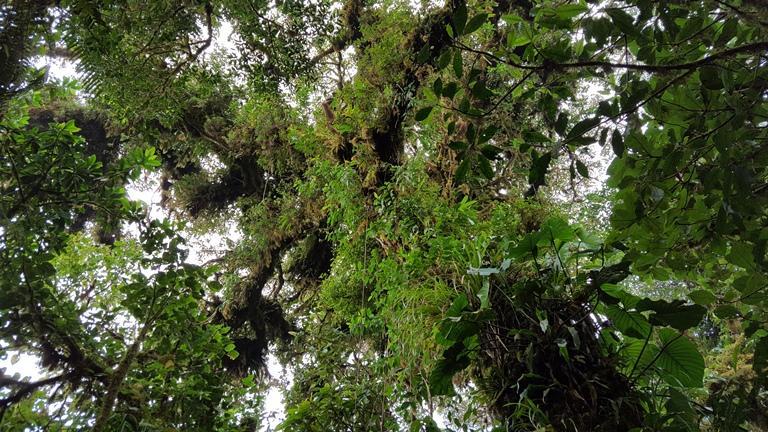 Так выглядит верхний слой облачного леса