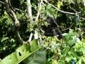 Caribbean wildlife (6)