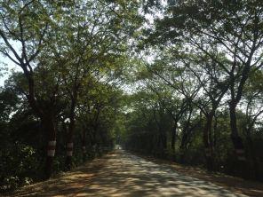 A beautiful road in Odhisa