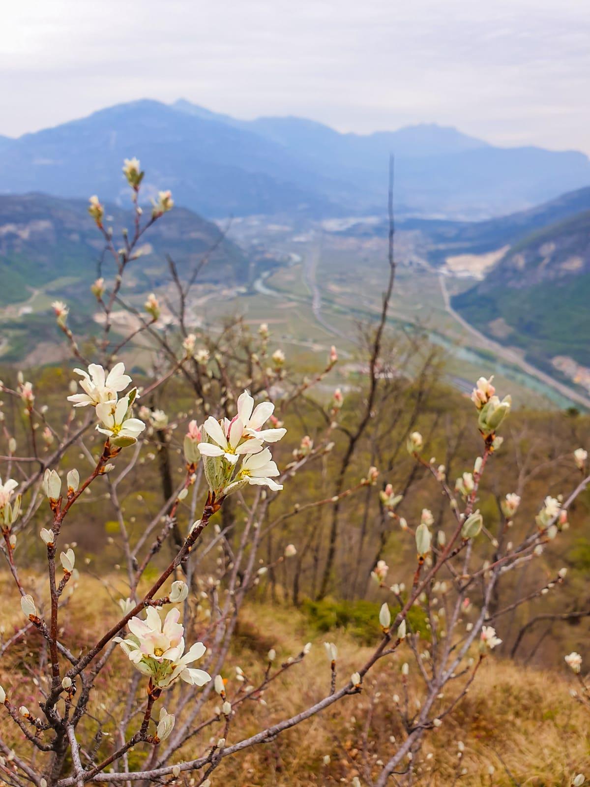 Love Trentino - Castel Sajori