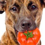 トマト 皮 注意点
