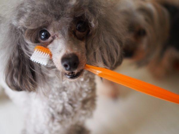 虫歯予防 ヨーグルト 歯磨き