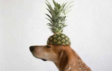 パイナップル 適切 量 注意点