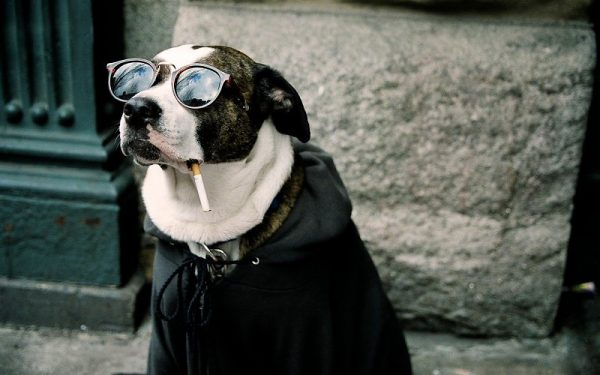 たばこ 誤飲 中毒 致死量