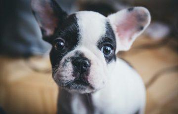 犬 アレルギー 注意点 無添加