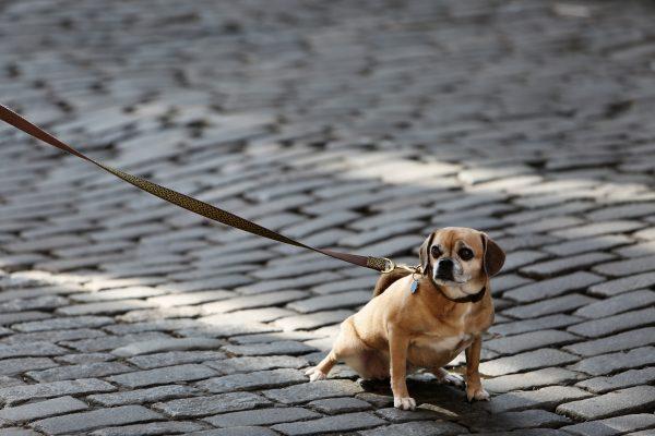 犬 咳 鼻水 対処法