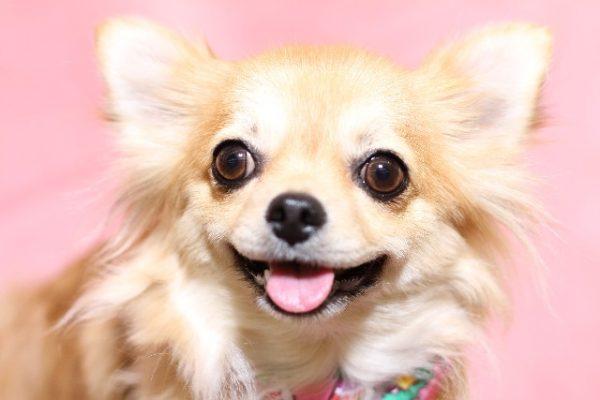 犬種 病気 症状 ケア