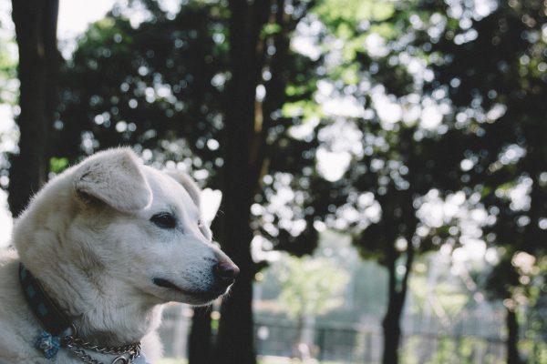 愛犬 保険 ポイント
