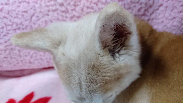 耳 耳垢 臭い 病気
