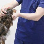 小型犬 保険 選び方