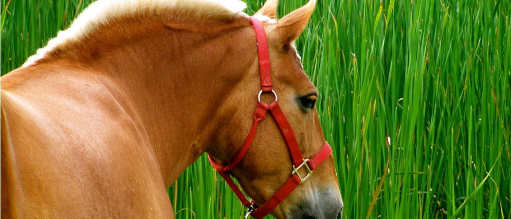 HorsePictureColorful