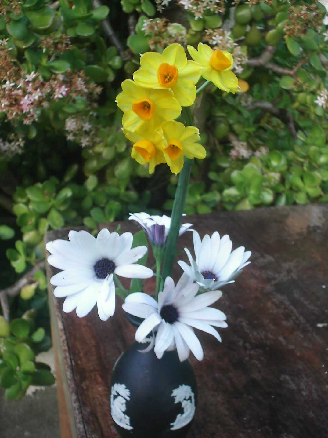 Jonquils and Swan River Daisies