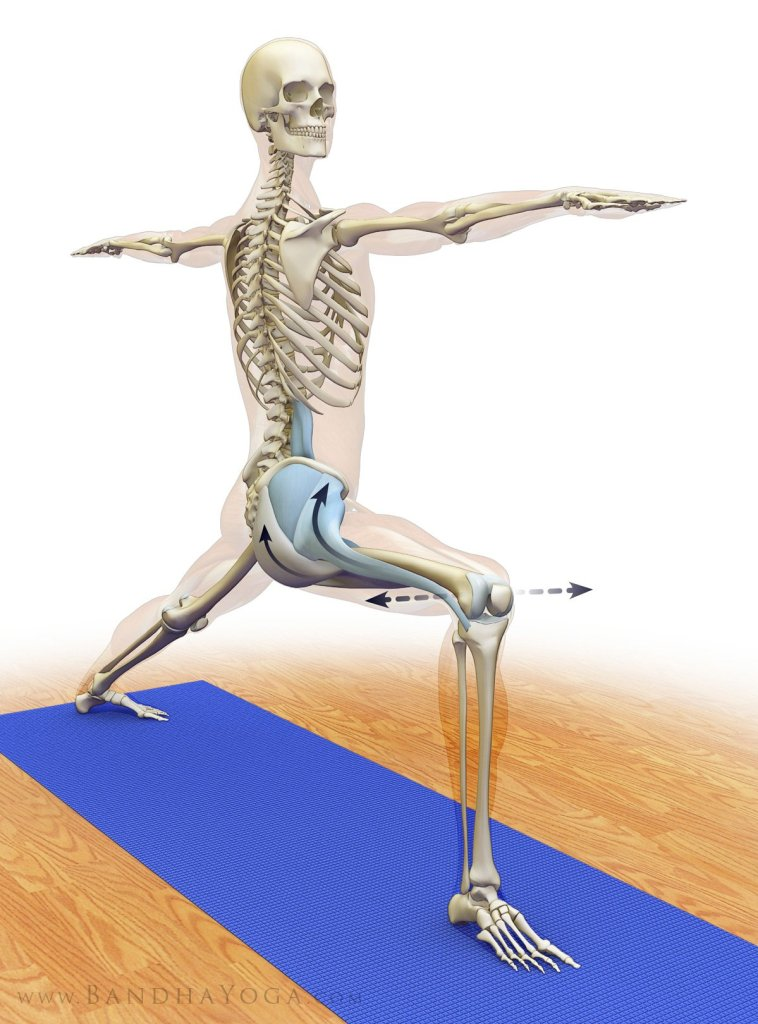 Figure 4: Co-activating the hip adductors, abductors and rotators in Warrior  II.