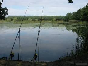 Фидер на болоте