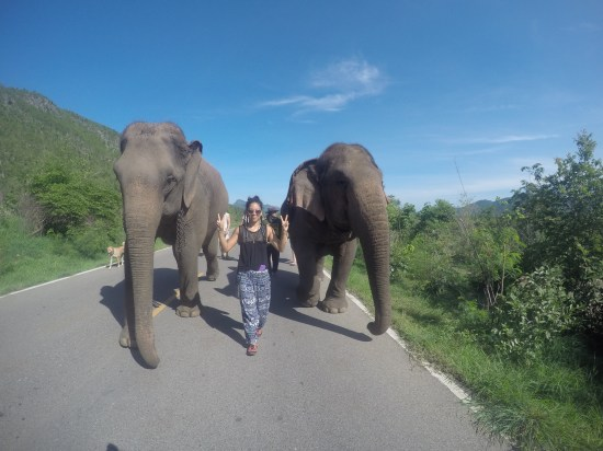 walking with the elephants