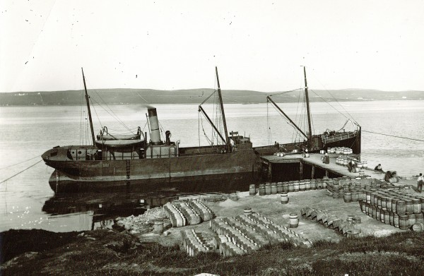 At work: SS Robin loading herring at Lerwick in the Shetland Islands, Scotland, in 1895